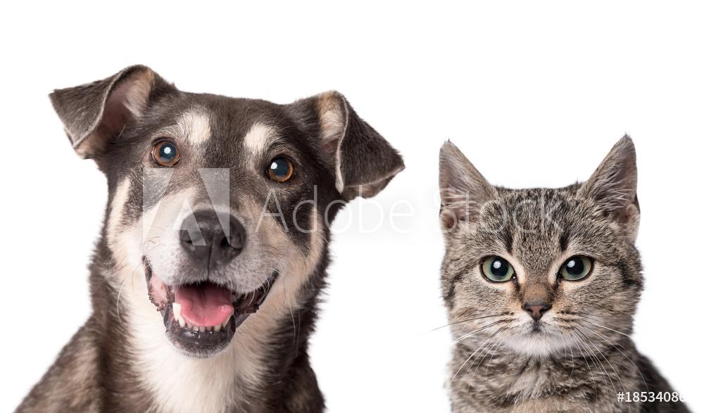 Eläintuotteet